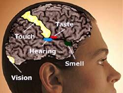 Beynin yaşlara göre bozulan fonskiyonları