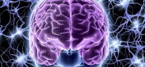 Gün İçinde Değişen Beyin Hacmi!