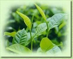 iki fincan yeşil çay strese iyi geliyor
