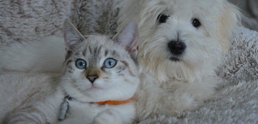 Evcil hayvanlarda mevsimsel duygu durum bozukluğu