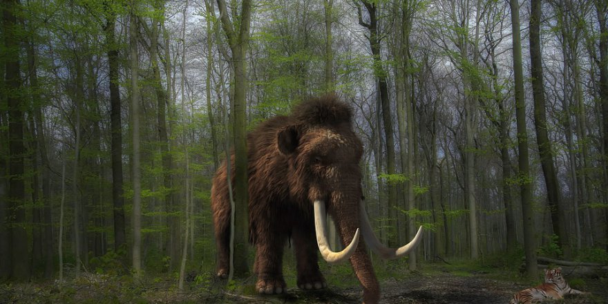 Küresel ısınmayla savaşmak için geri dönüyorlar (4 bin yıl önce soyları tükenen tüylü mamutları klonlama projesi)