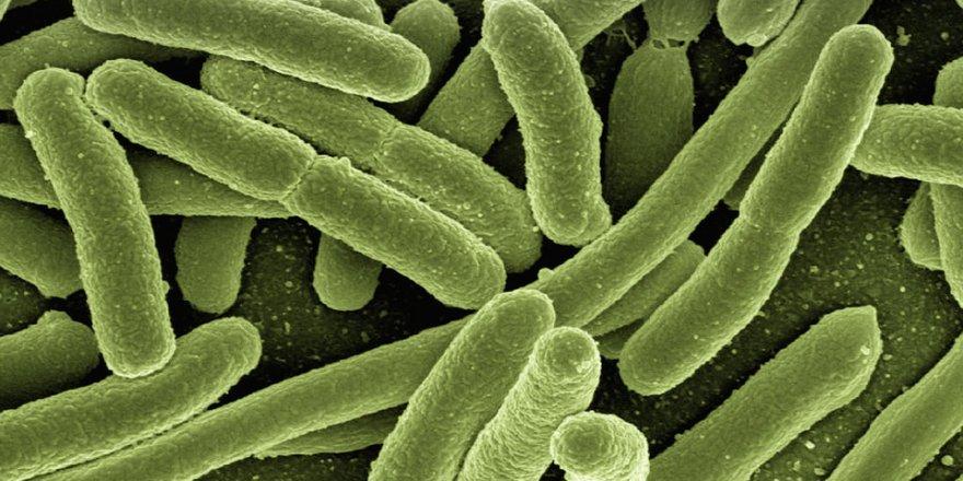 Bu bakteri psikolojinizi bozuyor