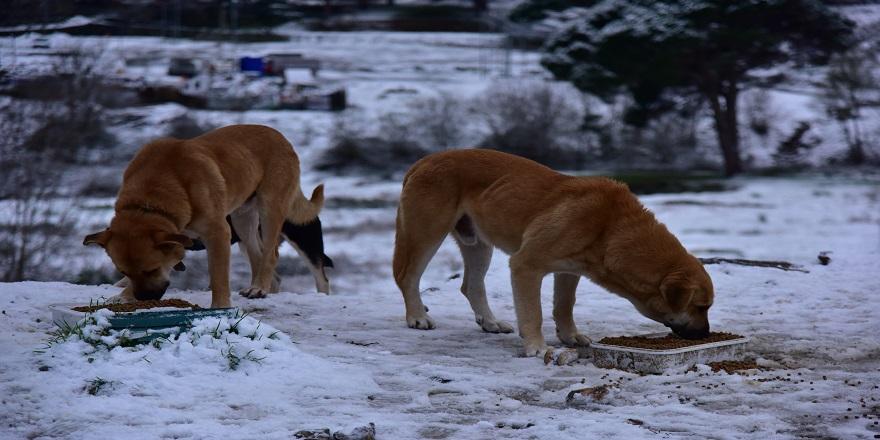 Soğukta Sahipsiz Hayvanlar Unutulmadı