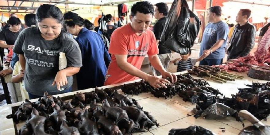 Corona virüs hayvan pazarından yayılmıştı! Yeniden ortaya çıktı