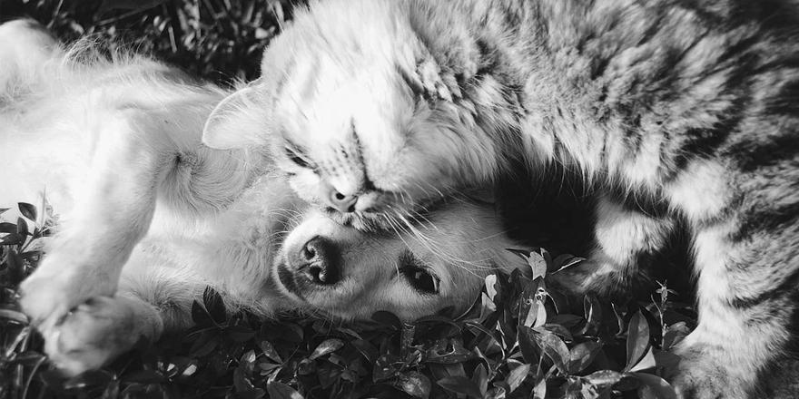 Koronavirüs Kedilere bulaşır mı?
