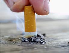 Biriken Nikotin Yağa Dönüşüyor