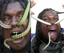 Yılanı burnundan sokup ağzından çıkarıyor