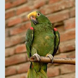 Depresyona giren papağan Prozac kullanıyor