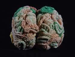Pamuk ipliğinden beyin ördü