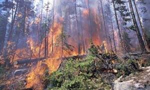 Şizofreni hastası ormanı yaktı