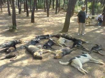 Hayvan Katliamı Psikiyatrik Bozukluktur