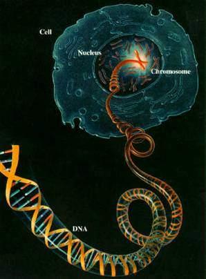 Farmakogenetik Yöntem Yaygınlaşıyor