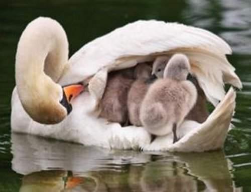 Sen Bu Alemin En Güzel Annesisin!