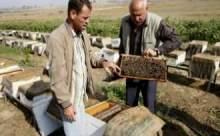 Gazze'de acıları arılar mı dindiriyor?