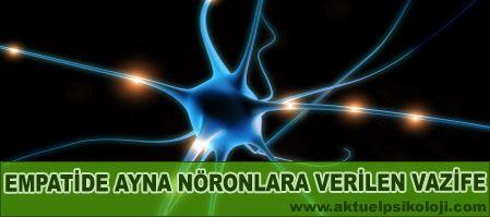Ayna Nöronlar Nedir ve İşlevleri Nelerdir?