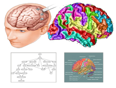 Beyin Haritası (Brain Mapping)