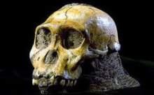 Kafatasında Bulunan Beyin 2000 Yıllık