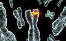 Genetik Farklılıkların % 95i Keşfedildi