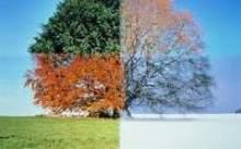Mevsimler Karakterimizi Belirliyor