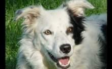 ABDli psikologlar bir köpeğe 1022 nesnenin adını öğretti