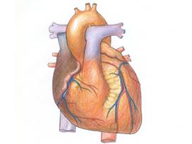 Kadınların kalbi daha sağlıklı atacak