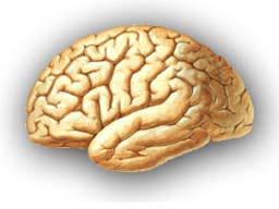 Beyin Hasarlarına Yeni Tedavi