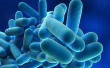 Probiyotiklerle Hiperaktivite ve Takıntı Tedavisi
