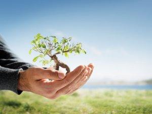 Yeşil Alanlar Psikolojik Sağlığı Doğrudan Etkiliyor