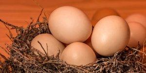 'Kanser ilacı yumurtlayan' tavuklar yetiştirildi