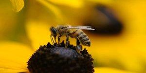 Eşek arıları bu denklemi çözebiliyor