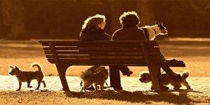 Hayvanlara neden yakınlık duyuyoruz?