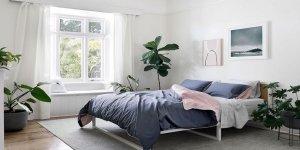 Daha iyi bir uyku için yatak odanızda bu 10 bitkiyi mutlaka bulundurun!