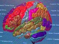 Beynin 'en mükemmel hali' 5 yıl sürüyor