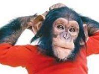 Şempanze Nim'in hayatı film