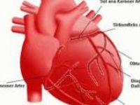 Kalp, Burun Gibi Koku Alıyor!