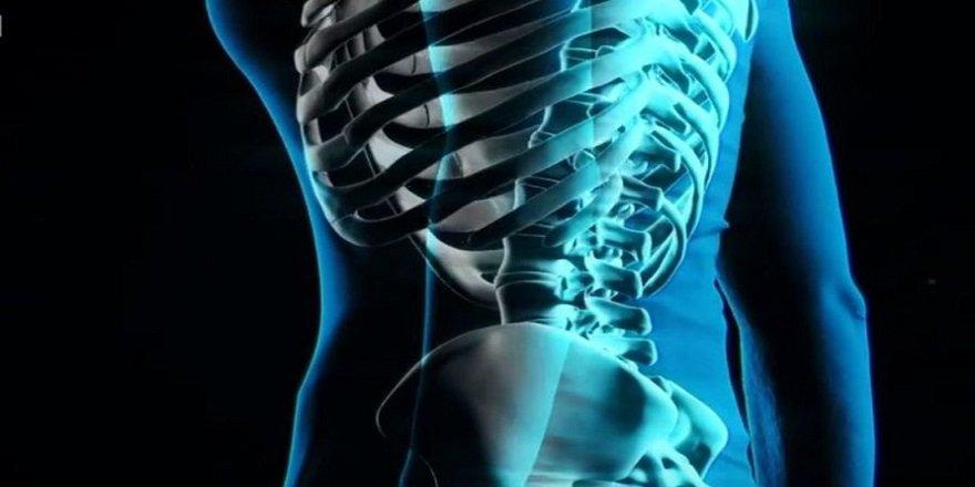 _102451844_spine-(2).jpg