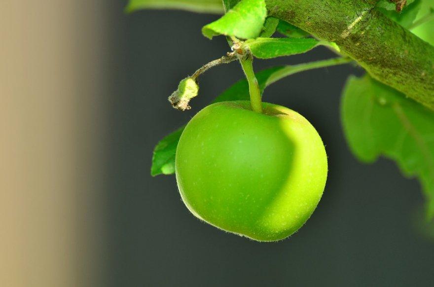 apple-1532055_960_720.jpg