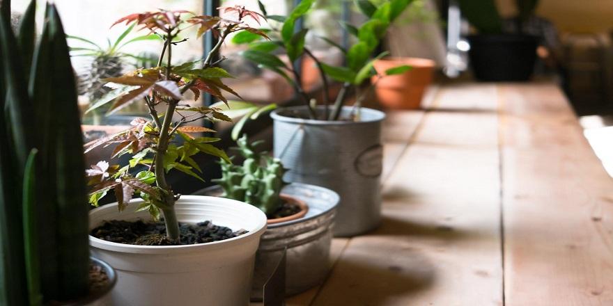 evinizin-havasini-bitkilerle-temizleyin.jpg