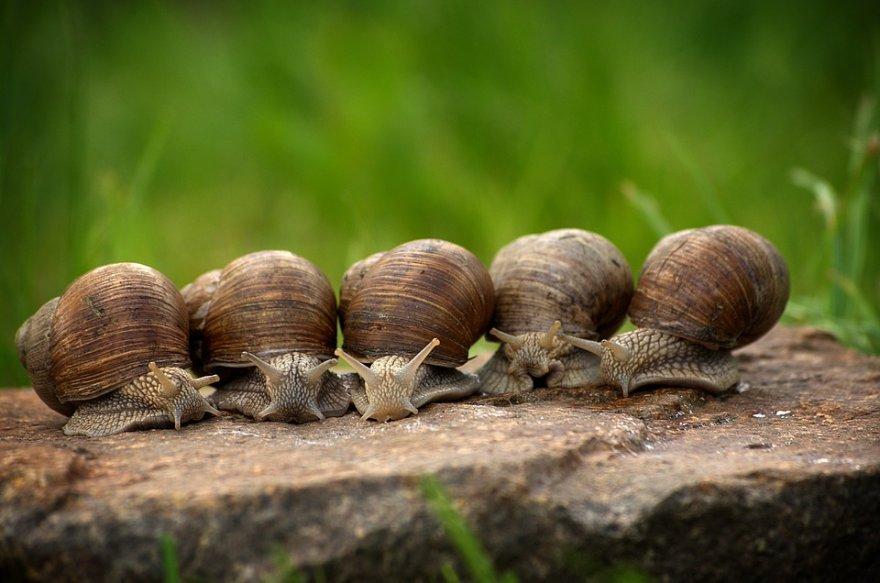 snail-2983235_960_720.jpg